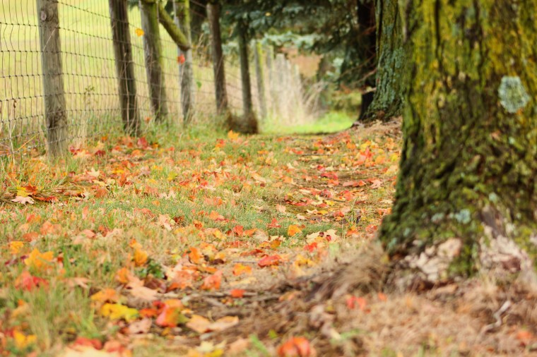 edit-leaves-ground-tree