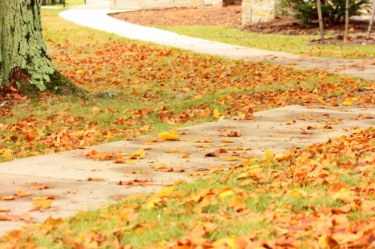 edit-leaves on path